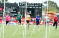 The field at the half-way mark of the 2013 Australia Post Stawell Gift.