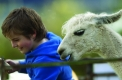Childrens petting zoo